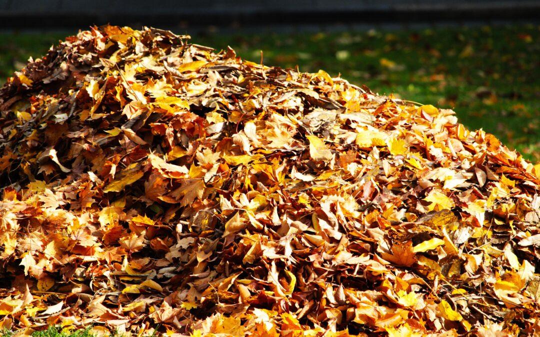 Jak obracać jesiennymi liśćmi w ogrodzie? Oszczędzaj czas dzięki odkurzaczom i dmuchawom do liści.